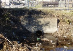 Drainage Structure in Ditch Along Lake Drive / Looking North (November 7, 2014)