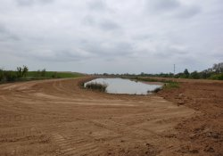 Area 4A Pond / Looking West (October 7, 2015)