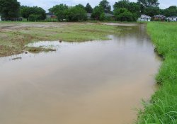 Wet Weather Conditions, Northeastern Former Ballfields Area / Looking North (June 26, 2015)