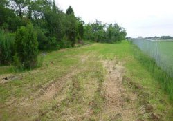 Vegetative Cover, OU-1 Gypsum Removal Area / Looking East (June 3, 2016)