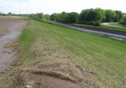Grass Emergence on Area 1B Slope, South of A&S Railroad Gabion Wall / Looking North (May 21, 2015)