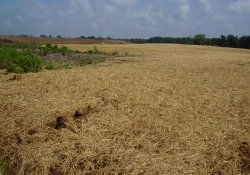 Straw Cover for New Grass Seeding Area / Looking North / Northeast (August 18, 2014)